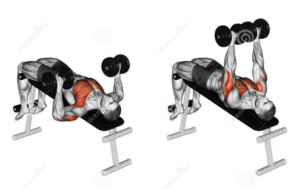 Incline & Decline Dumbbell Presses